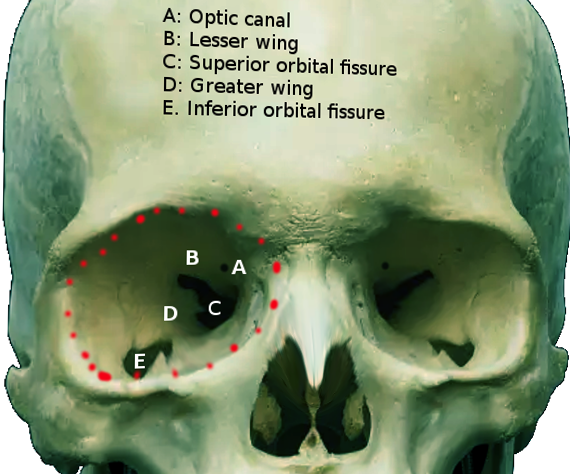 Optic canal