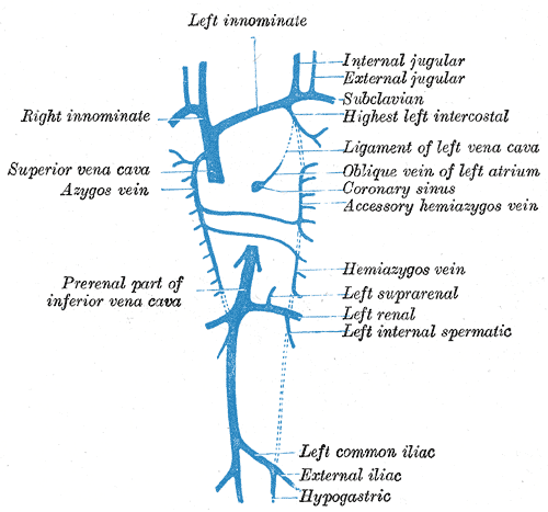 Embryology, hemiazygos vein, Right Innominate, Azygous Vein, Development of Veins