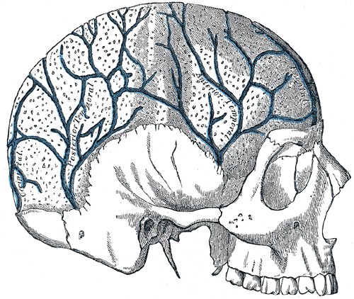 Veins in the Skull, Occipital, Posterior temporal, Anterior Temporal