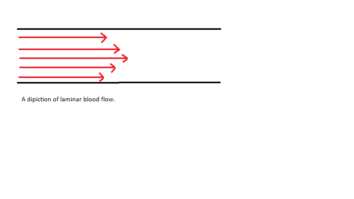 A depiction of laminar flow in a cross section of a blood vessel.  The red arrows represent blood flow velocity and the black lines represent blood vessel walls.