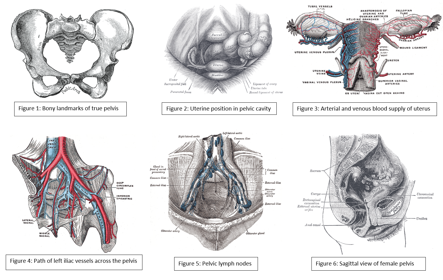 Anatomy, Abdomen and Pelvis, Female Pelvic Cavity Article
