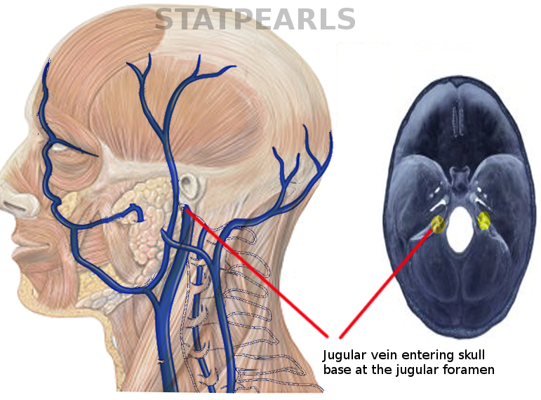 Course of jugular vein