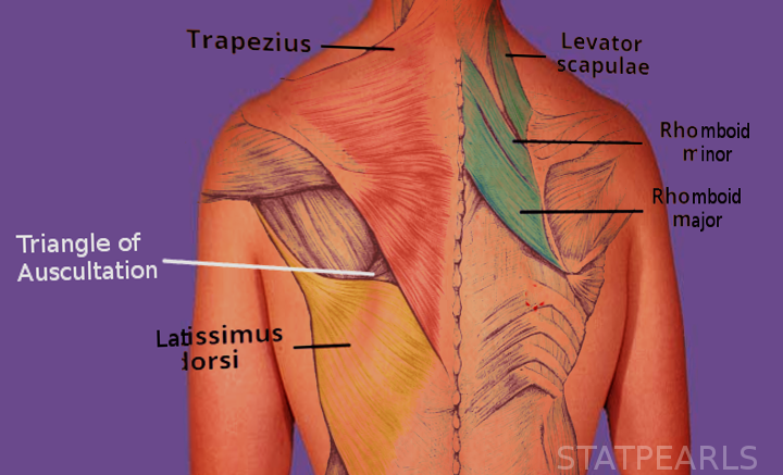 Triangle of Auscultation