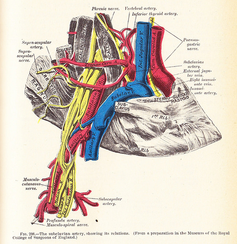 The right subclavian artery and surrounding structures.