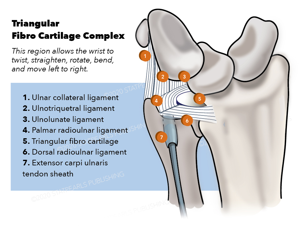 Triangular Fibro Cartilage Complex
