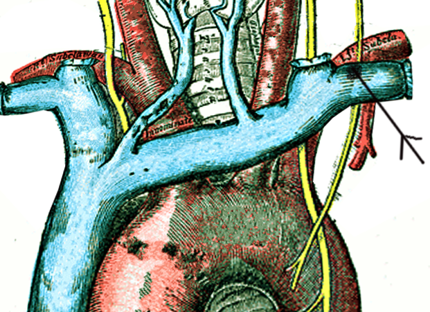 Thoracic duct termination
